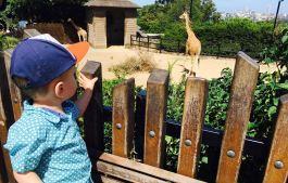 Lucas and giraffes